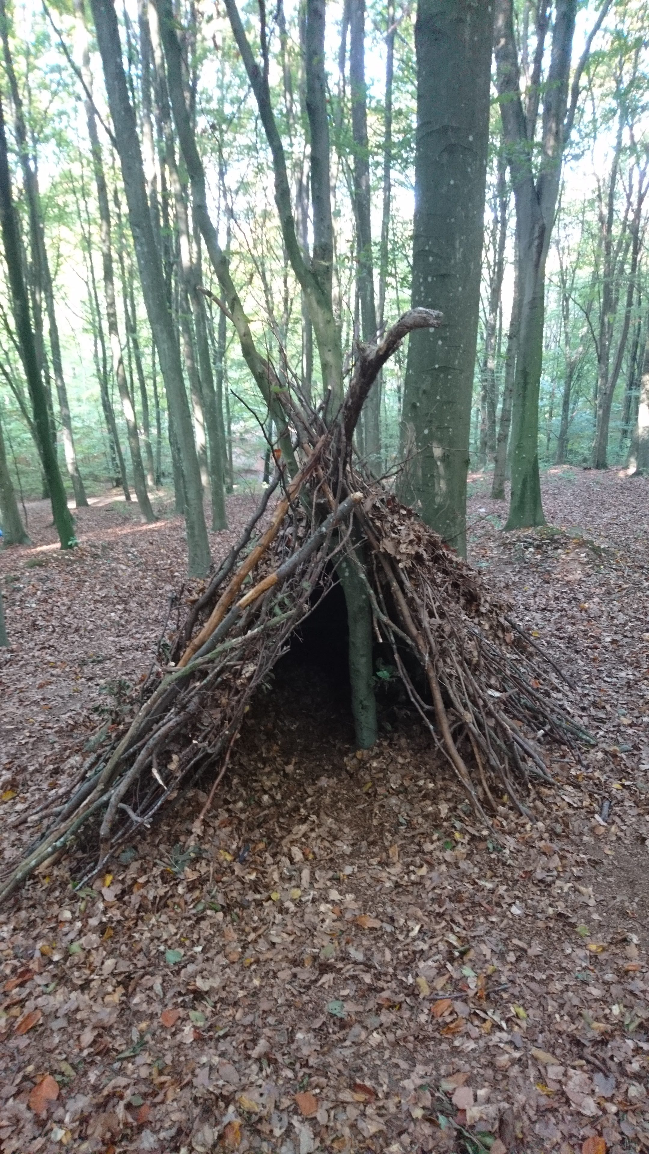 A den in the woods